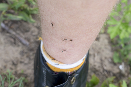 Several little ants on the foot of a man, the theme of insect bites, a close-up