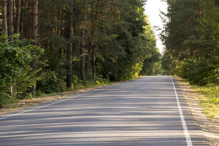 Asphalt road in a pine forest on a clear summer day Stock fotó