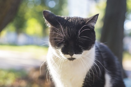 Black and white cat with eyes closed in cold weather in autumn. Banco de Imagens