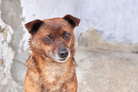 Unhappy stray dog with sad eyes on a city street Reklamní fotografie
