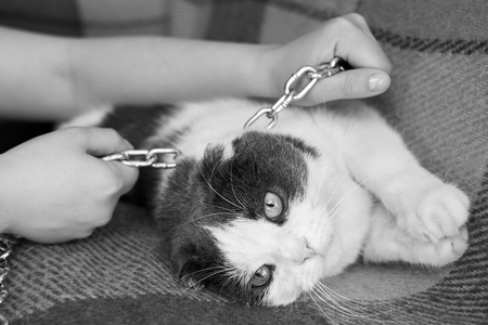 Violence against pets, the owner keeps her cat on the chain