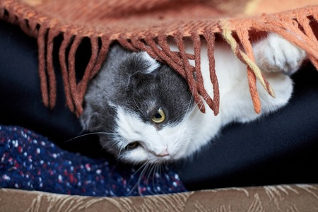 Cute cat lies on the legs of the girl in socks under the rug
