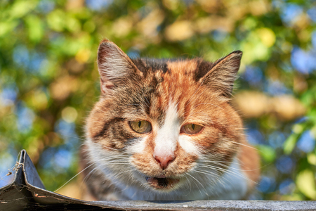 Portrait of a sad cute homeless cat sitting on the roof against the background of trees, homeless animal theme Reklamní fotografie