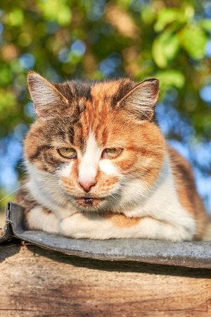 Portrait of a sad cute homeless cat sitting on the roof against the background of trees, homeless animal theme Stock fotó