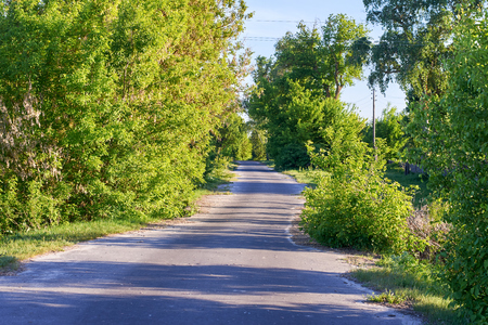 A narrow asphalt road on the sides of which grow bushes and trees passing through the village. Stock fotó