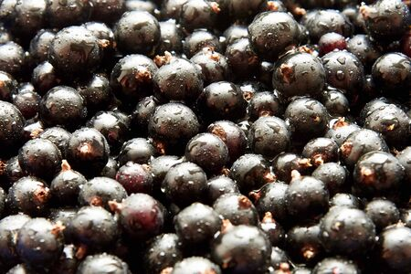 Black ripe currant with water droplets, berry background, close-up Reklamní fotografie