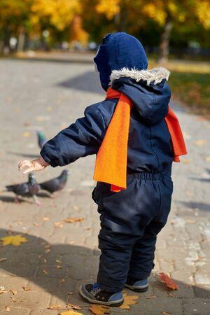Un petit garçon en salopette et un drôle de chapeau nourrit des pigeons de blé dans le parc en automne, vue arrière. Banque d'images