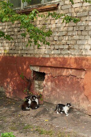 Cute homeless kittens near an old brick house, homeless animal theme.