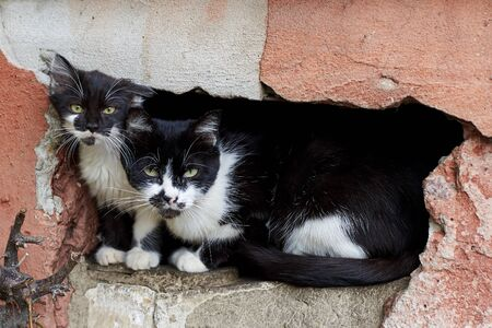 Cute homeless kittens with a sad look sitting in a stone wall, homeless animal theme.