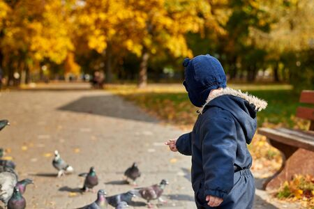 Little boy in overalls and a funny hat feeds pigeons wheat in the park in autumn, back view. Stock Photo