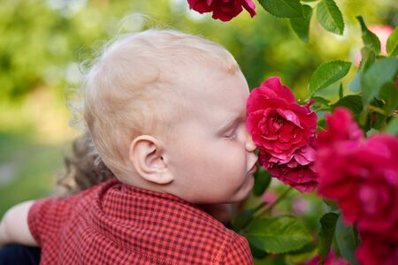 Little cute boy in a plaid shirt sniffs a beautiful rose bush.