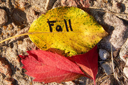 The inscription Fall is written on a yellow leaf against a background of stones.