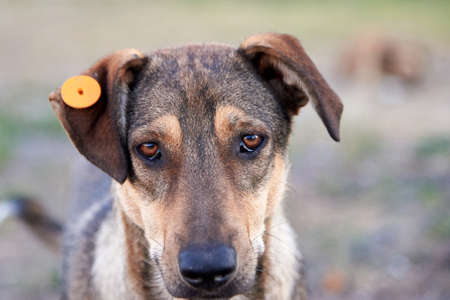 Portrait of a very sad dog with a tag in his ear on the city street, the problem of homeless animals.