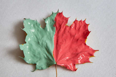 The maple leaf is half coral and half pastel green on a white background.