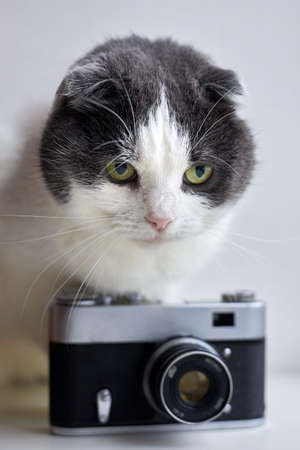 Serious fold cat sits near a vintage camera on a light background.