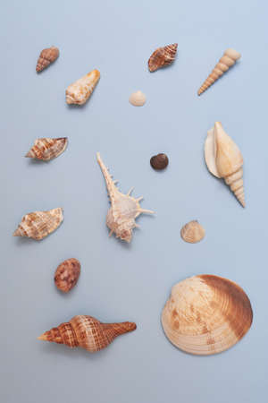 Beautiful seashells and stones on a blue background, summer concept. 免版税图像