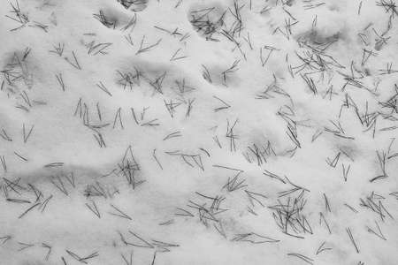 Winter background, spruce needles scattered in the white snow.