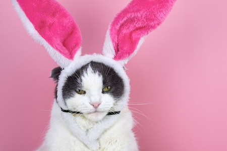 Funny serious cat with rabbit ears on a pink background.