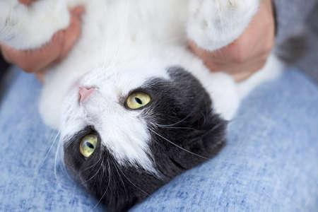 A woman is holding the paws of her cat, which is lying on her lap, the theme of friendship with pets. Banco de Imagens