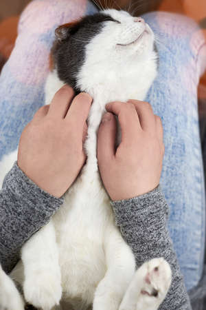 Woman stroking a cat, which lies in her lap, the theme of friendship with pets.