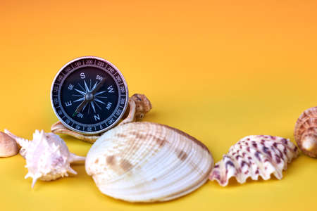 Compass and seashells on a bright yellow background, marine composition.