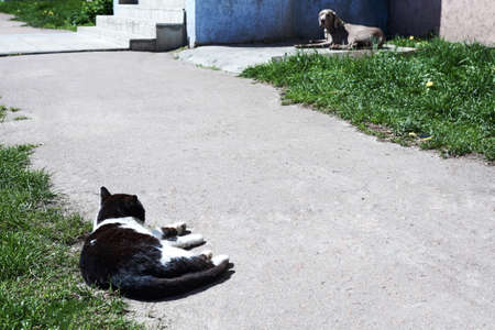 A cat watches a dog on a leash on a city street in summer, animal behavior.