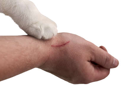 Scratch on a man's hand made by a cat, a cat's paw on a hand of an owner, close-up, isolated on white.