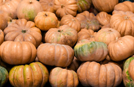 Pumpkins lined up in a row.