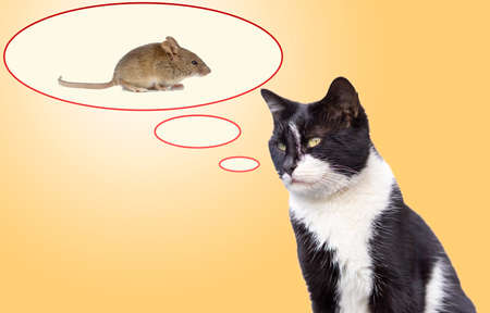 the cat thinks the mouse in the speech bubble.
