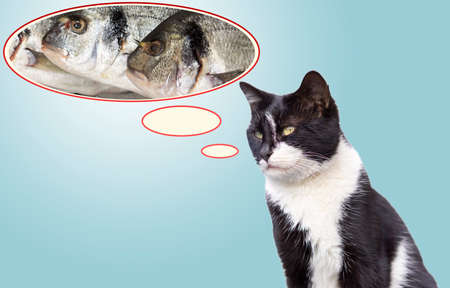 the cat thinks the fish in the speech bubble. 免版税图像