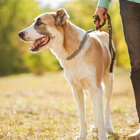 dog running: El hombre y pastor de Asia Central a pie en el parque Se mantiene el perro en la correa