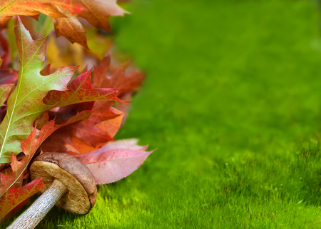Autumn oak leaves and mushroom on moss  photo