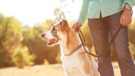 남자와 공원에서 중앙 아시아 양치기 거리에 있습니다. 그는 가죽 끈에 개를 유지합니다.