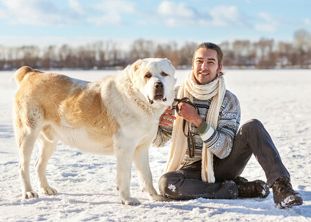 Man and central Asian shepherd walk in the park photo