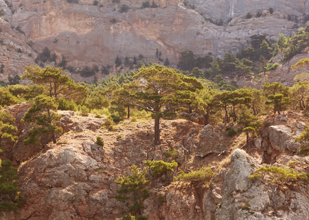 newfound gap: Landscape in the mountains, mighty pine trees and juniper can  Stock Photo