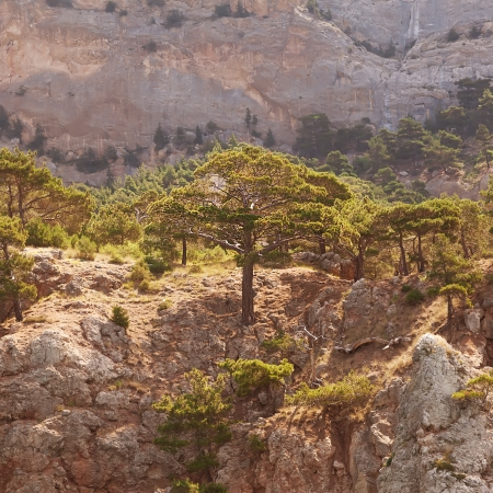 wnc: Landscape in the mountains, mighty pine trees and juniper can  Stock Photo