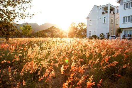 residence: Large house on a beautiful field