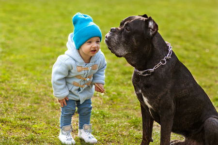 little child plays with a dog on the grass, Cane Corso