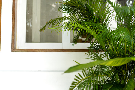 white wooden window with tropical plants Stock Photo