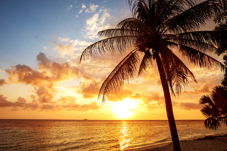 sunset on the sea with tropical palm trees Stock Photo