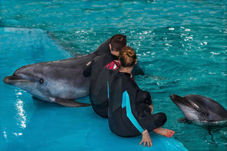 trainers dolphin are engaged in a pool
