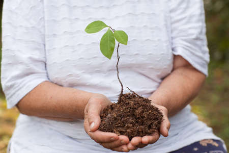 hands of an old woman hold a sprout of a tree. Planet conservation