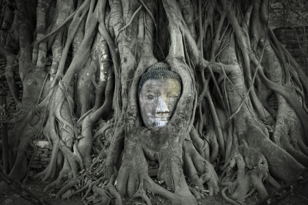 Myanmar: Chef de Bouddha en gr�s Les Racines d'arbre aux Wat Mahathat, Ayutthaya, Tha�lande