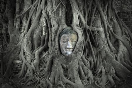 angkor: Head of Sandstone Buddha in The Tree Roots at Wat Mahathat, Ayutthaya, Thailand