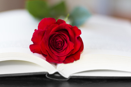The open book and a red rose