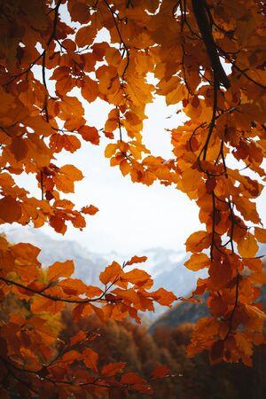 leaves frame: Naranja deja el marco Foto de archivo
