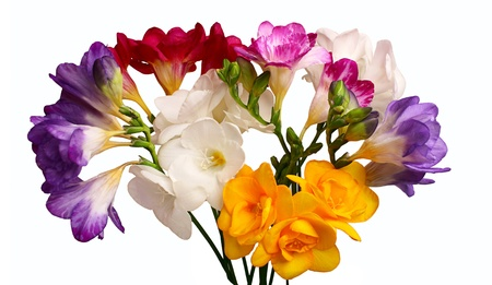 Colorful bouquet of freesia isolated on a white background Stock Photo - 18197993
