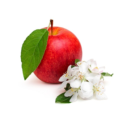 Red apple with leaf and apple flowers?isoleted on a white background.