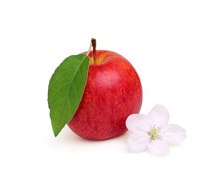 Ripe apple with a flower,isoleted on a white background. photo