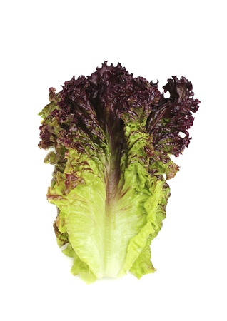 isoleted: Lettuce vertically with purple tips,isoleted. Stock Photo